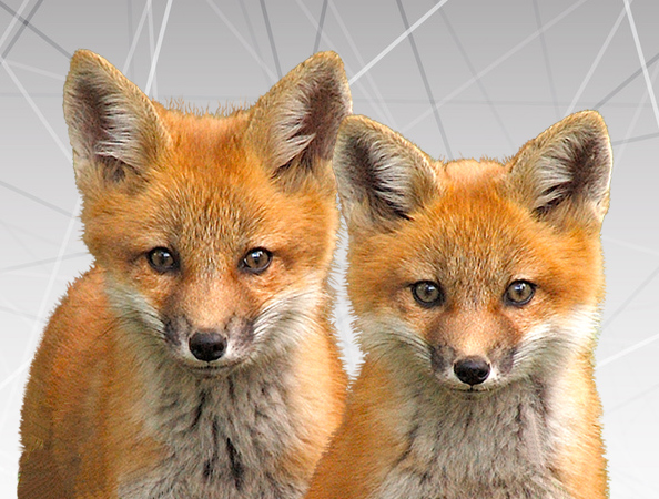 Double Fox Website team of clever foxes