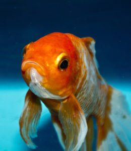 Website speed matters - attention span of a goldfish
