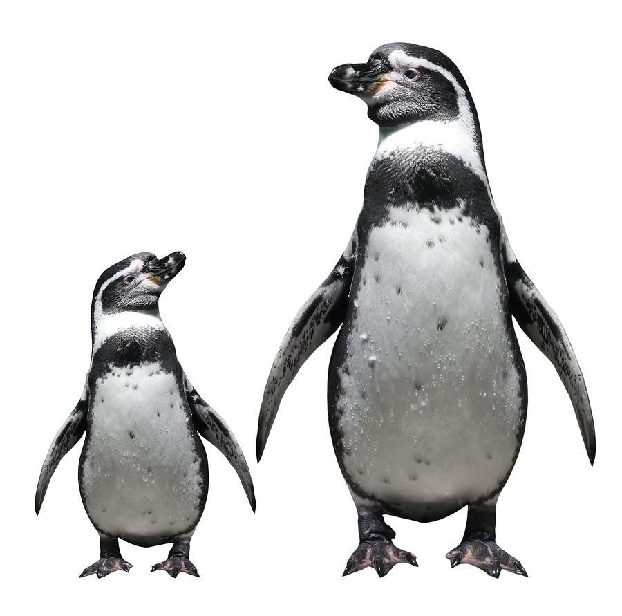 Penguins walking through the website design process together.