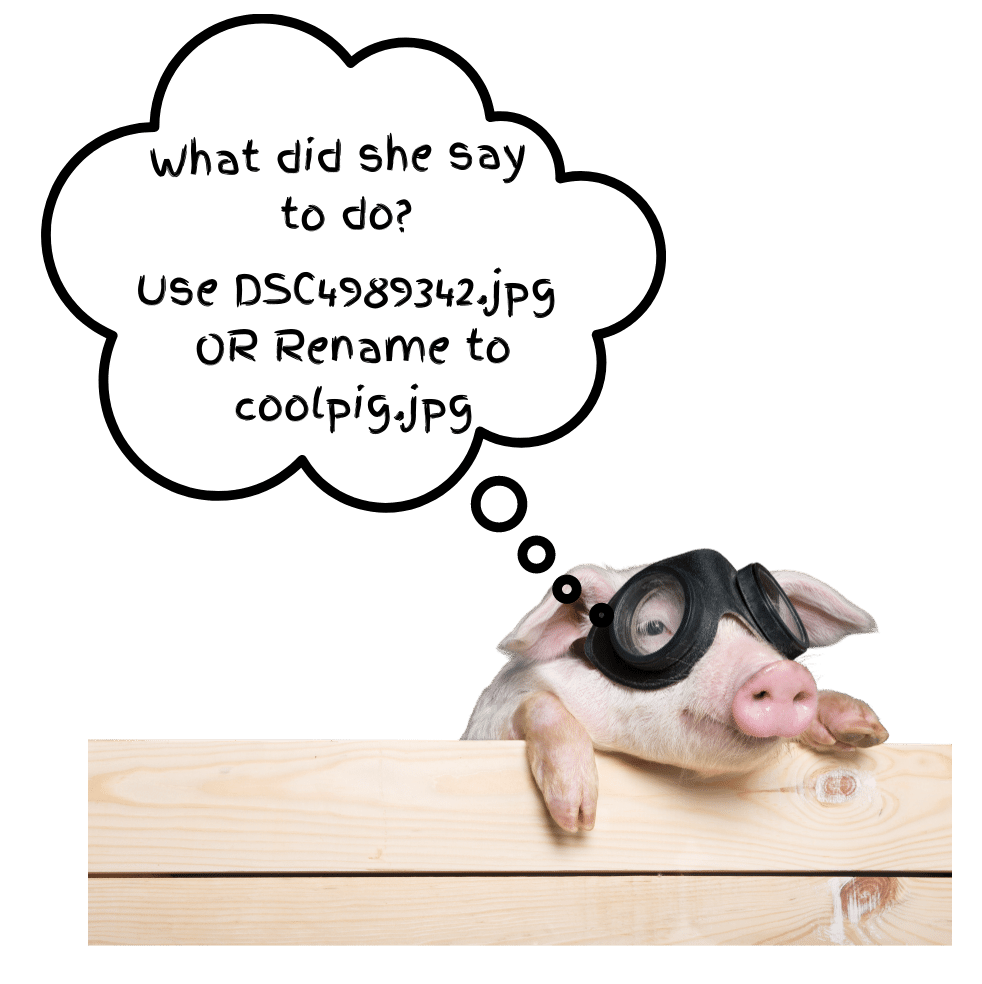 Pig thinking to rename images descriptively for SEO and other purposes.