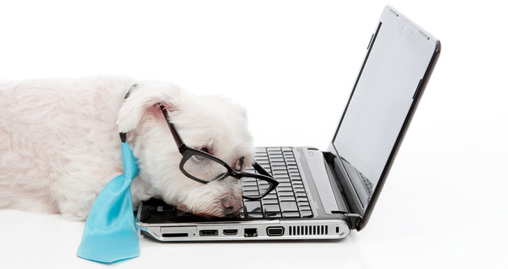 Information overload exhausts this puppy laying on the laptop keyboard